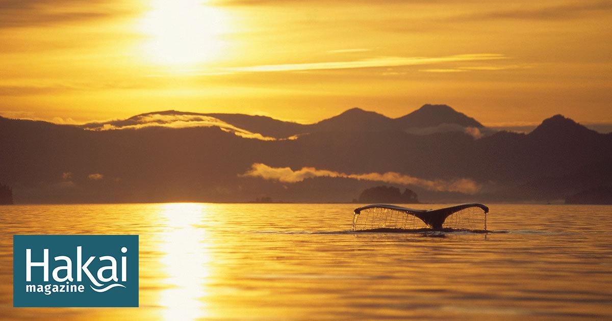 La balena que sopava sola