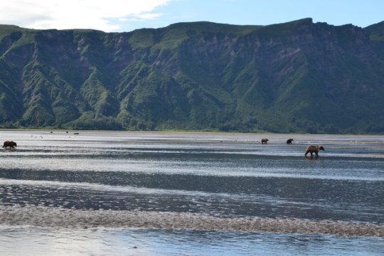 Agama: Viatges a Alaska i Yukon