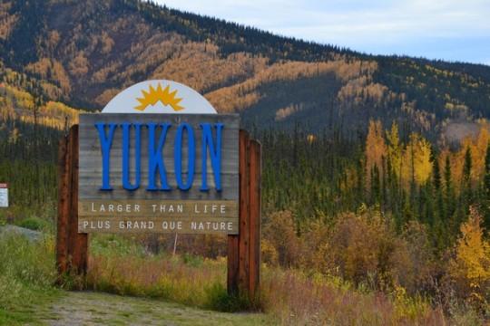 Landi, la tortuga blanca, a través del Yukon