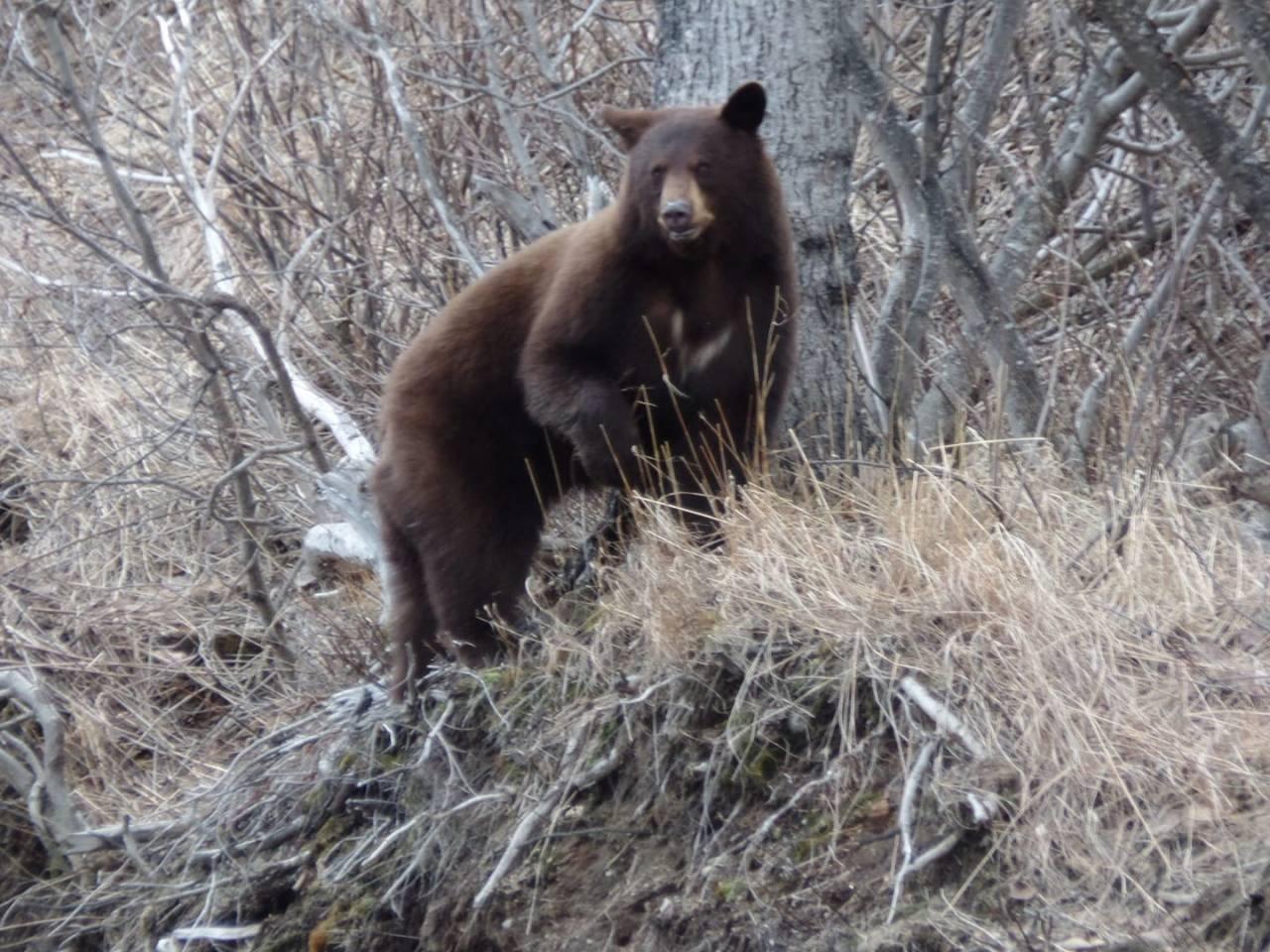 Els problemes d'acabar amb el confinament a Alaska